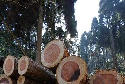 木質バイオマス